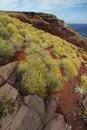 Wild Yellow Flowers On Rocks, ...