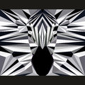 Wild zebra stares forward. Nature and animals life theme background. Abstract geometric polygonal triangle illustration