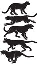 Wildcat the figure shows the silhouettes of wild cats Royalty Free Stock Image