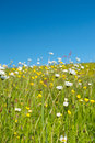 Wilde Blumen im Sommer Stockfotos