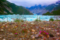 Wilde Blumen nahe Mc'Bride Gletscher in Nationalpark Glacier Bays. Stockfotos