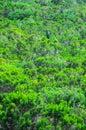 Wilder forest pine tree leaves texture Stockfotografie