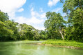 Wilderness along the Martha Brae River in Jamaica. Royalty Free Stock Photo