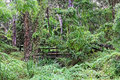 Wilderness bridge a old wooden in the overgrown and forgotten australian nature Stock Photo