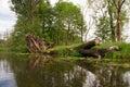 Wilderness dead tree in lake spreewald Royalty Free Stock Photo