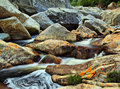 Wilderness river rocks western cape south africa Stock Photo