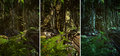 Wilderness scene d cg graphics jungle lighting in three variants Royalty Free Stock Photos