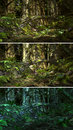 Wilderness scene d cg graphics jungle lighting in three variants Stock Image