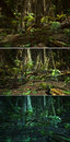 Wilderness scene d cg graphics jungle lighting in three variants Royalty Free Stock Photo
