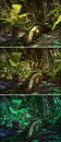 Wilderness scene d cg graphics jungle lighting in three variants Stock Photos