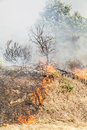 Wildfire forest fire with flames dark smoke and burned vegetation Royalty Free Stock Photography