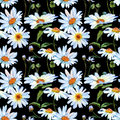 Wildflower daisy flower pattern in a watercolor style. Royalty Free Stock Photo