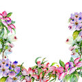 Wildflower dogwood flower frame in a watercolor style isolated.