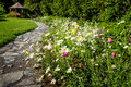 Wildflower garden and path to gazebo with paved leading blooming daisies Stock Photos