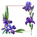 Wildflower iris flower frame in a watercolor style isolated.