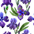 Wildflower iris flower pattern in a watercolor style isolated.