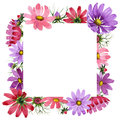 Wildflower kosmeya flower frame in a watercolor style isolated.