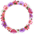 Wildflower kosmeya flower frame in a watercolor style isolated. Royalty Free Stock Photo