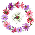 Wildflower kosmeya flower wreath in a watercolor style isolated.