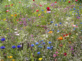 Wildflower meadow in the new forest national park hampshire Royalty Free Stock Photo