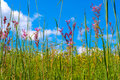 Wildflower meadow wildflowers growing in a reach above toward the sky Royalty Free Stock Photography