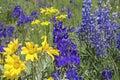 Wildflower meadows closeup Royalty Free Stock Photo