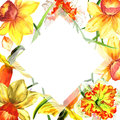 Wildflower Narcissus flower frame in a watercolor style isolated.