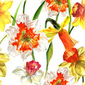 Wildflower Narcissus flower pattern in a watercolor style isolated.