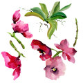 Wildflower orchid flower in a watercolor style isolated.