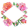 Wildflower rose flower frame in a watercolor style.