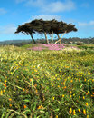 Wildflowers at 17 Mile Drive - Monterey, California Stock Photo