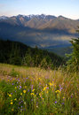 Wildflowers Cover Hillside Olympic Mountains Hurricane Ridge Royalty Free Stock Photo