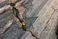 Wildflowers In A Crevice