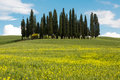 Wildflowers and cypress trees in tuscany front of the famous italy Royalty Free Stock Photo