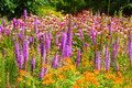 Wildflowers especially blazing star and purple coneflowers growing in profusion Stock Image