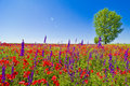 Wildflowers field Royalty Free Stock Images