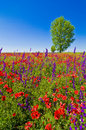Wildflowers field Stock Photography