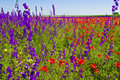 Wildflowers field Royalty Free Stock Photos