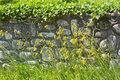 Wildflowers in front of stone retaining wall Stock Photos