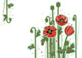 Wildflowers poppy white background red flowers card Stock Images