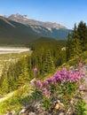 Wildflowers, Rocky Mountain, Canada Royalty Free Stock Photo