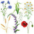 Wildflowers Set Royalty Free Stock Photo