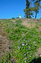 Wildflowers on slope, blue sky with a dome and a golden cross. Vertical photo of a beautiful nature Royalty Free Stock Photo