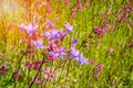 Wildflowers on a sunny summer day Royalty Free Stock Photo