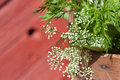 Wildflowers wild flowers in a basket closeup Stock Photography