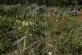 Wildflowers in Wyoming Wind River Range Royalty Free Stock Photo