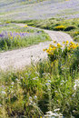 Wildflowers yellow and blue in full bloom in the mountains Royalty Free Stock Photos