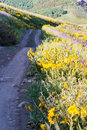 Wildflowers yellow and blue in full bloom in the mountains Stock Images