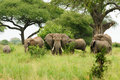 Wildlife in africa elephants famili safari Royalty Free Stock Photo