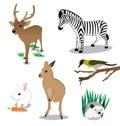 Wildlife cartoon set on white background Stock Photo